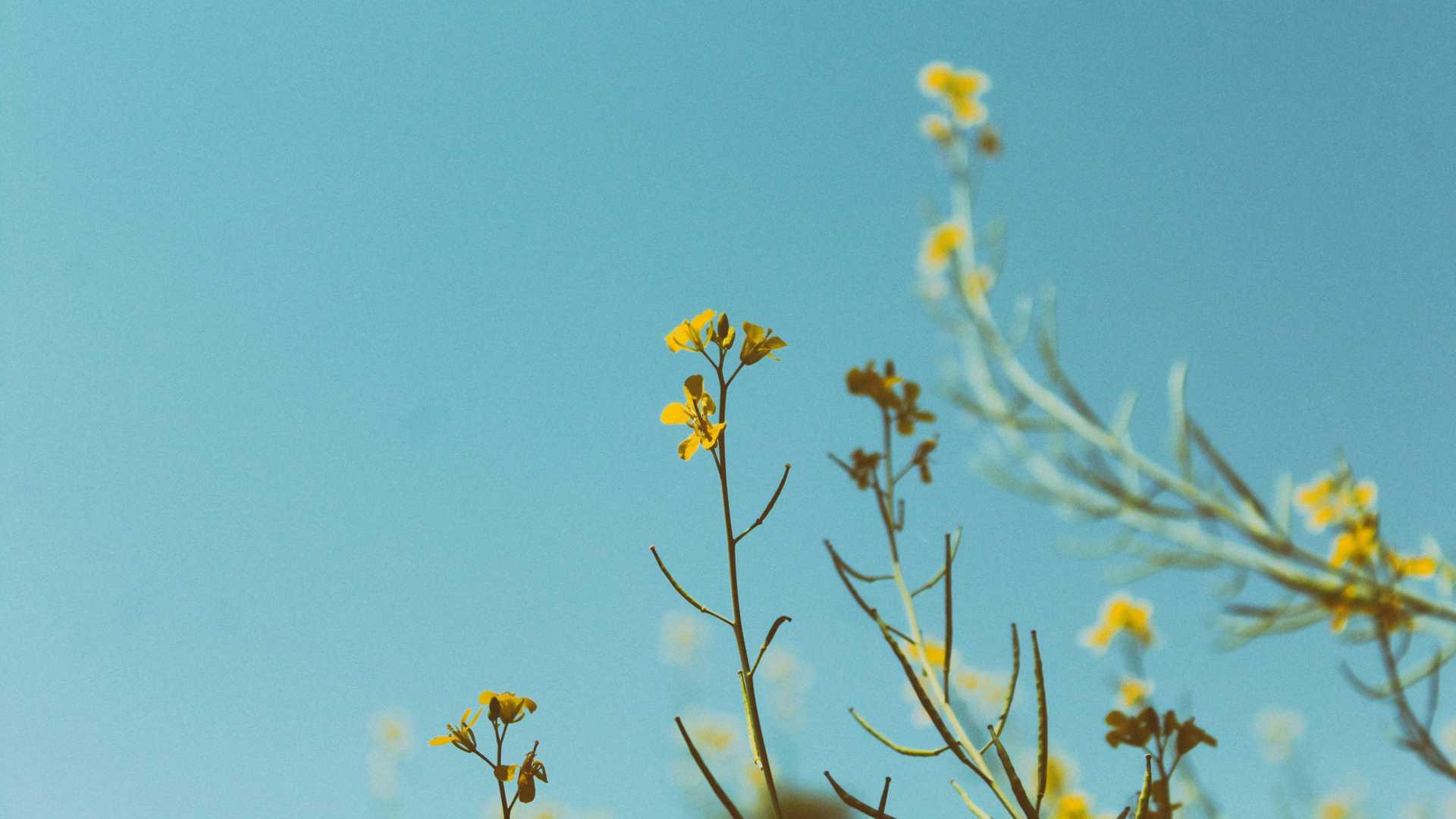 Header Blumen blau